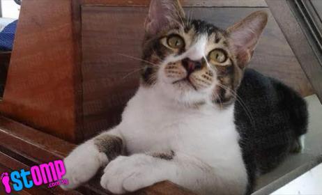 cat main.jpg