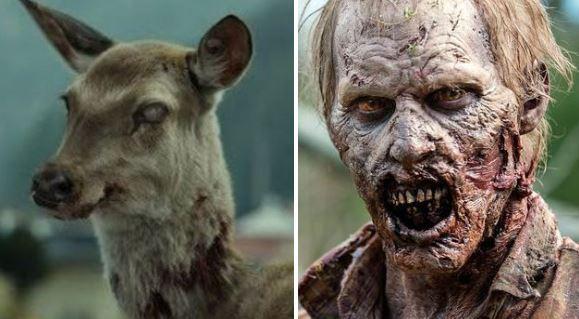 zombiedeer.jpg