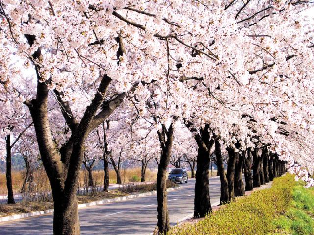Gyeongpodae road(Credits to Gangneung City Hall).jpg