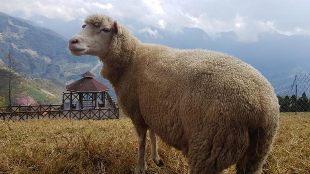 CingJing Sheep Farm 010.jpg
