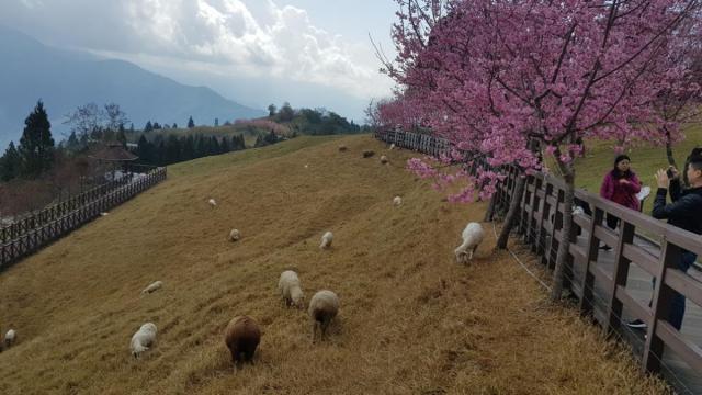 CingJing Sheep Farm 004.jpg