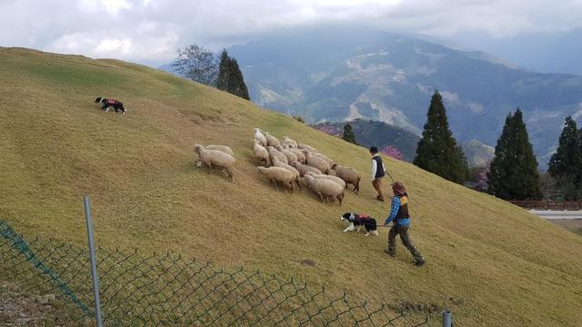 CingJing Sheep Farm 017.jpg