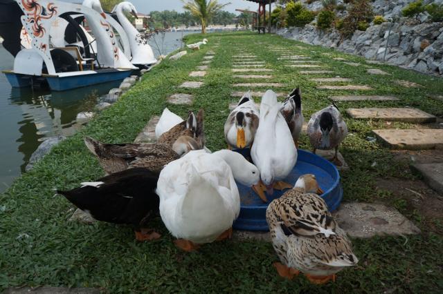 Trong Leisure Farm 007.JPG