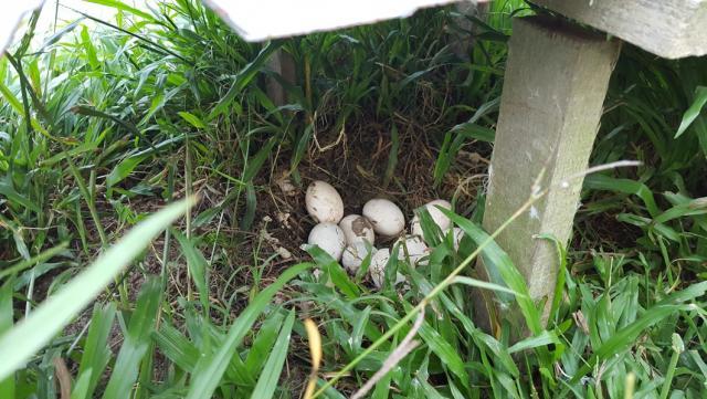 Egg 001.jpg