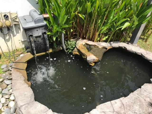 Koi pond.jpeg